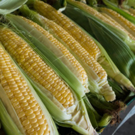 The History of Corn (Complete Story)