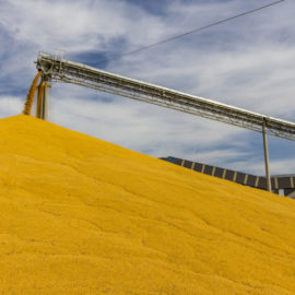 What is Corn Wet Milling?