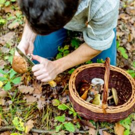 What is Foraging? How Do You Forage?