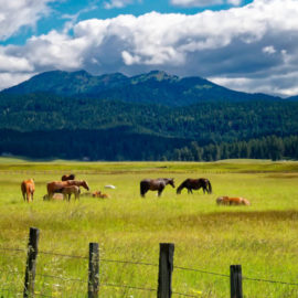 Good and Bad Pasture Management (Examples)