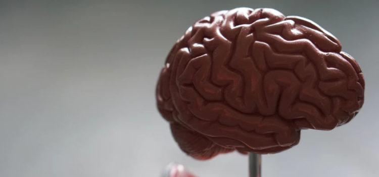 The Limbic System of the Brain & Navigating Trauma