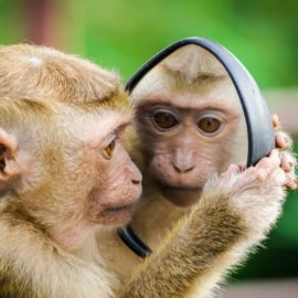 Your Inner Chimp (and How to Manage It)