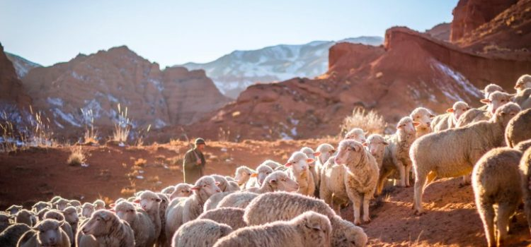 Law 42: Strike the Shepherd and the Sheep Will Scatter (48 Laws of Power)