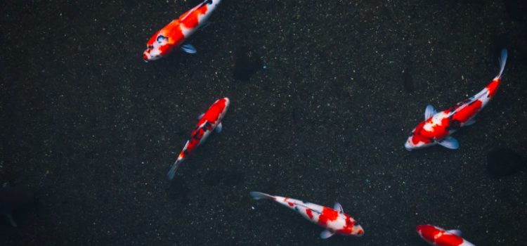 Choosing a School? Beware the Big-Fish-Little-Pond Effect