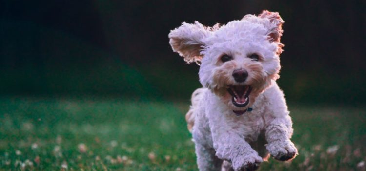 Trevor Noah's Adorable Dog Fufi, and Why She Broke His Heart