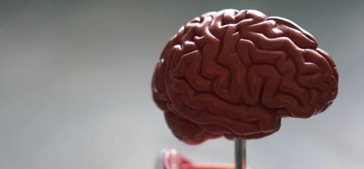 Cognitive Revolution (Sapiens): How Gossip Changed Our Brains