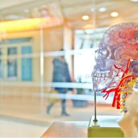 Evolution of Human Intelligence: Language Changed Everything