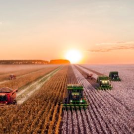 History of Agriculture: Was Farming an Accident?