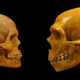Neanderthal DNA in Modern Humans: How It Got There