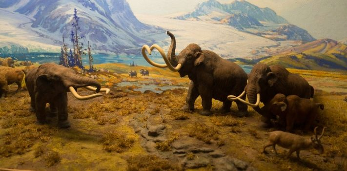 Pleistocene Extinction: When Humans Became Serial Killers