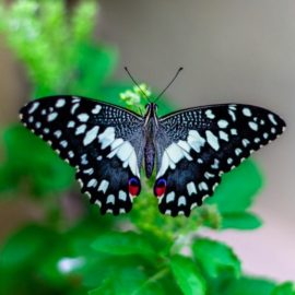 Butterfly Effect Theory Explained: Impact of Small Acts