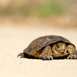 Crawl-Walk-Run Approach to Tech: In Business, Slow Is Better