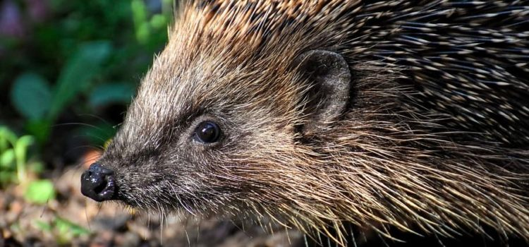 Are You a Fox or a Hedgehog? Why One's the Better Leader