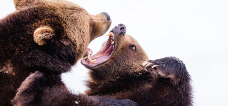 Territorial Aggression: Why Animals Fight