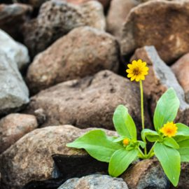 The Growth Mindset: How to Develop Your Grit
