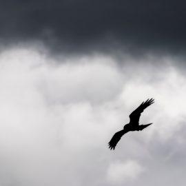 Who is The Bird in Unbroken? Louis's Worst Nightmare