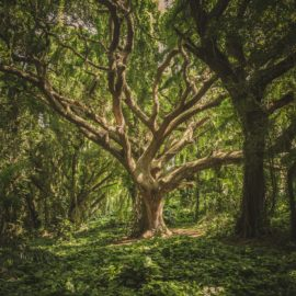Free Yourself and Your Soul From the Ashvattha Tree