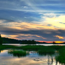 In Where the Crawdads Sing, the Marsh Is Alive