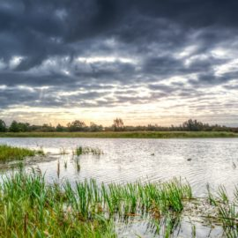 Where the Crawdads Sing Setting: Life in the Marsh