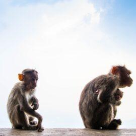 The Reston Monkey House: First US Ebola Outbreak