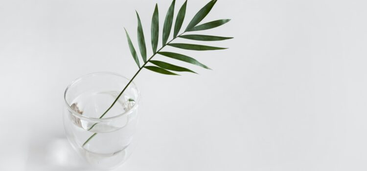 What Is the Plant Paradox? Does It Really Work?