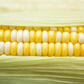 Beware the Dangers of Genetically Modified Foods