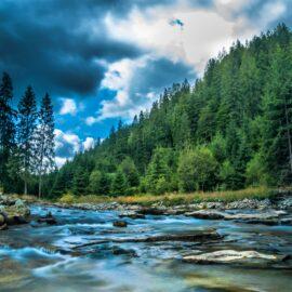 Habitat Fragmentation: Effects on Biodiversity