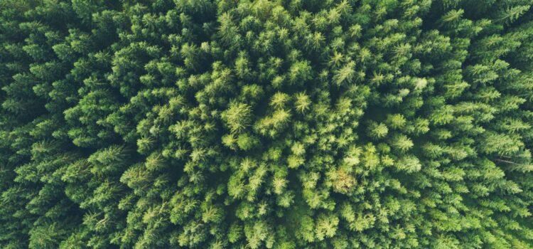 Nudging Environmental Behavior: How to Go Green