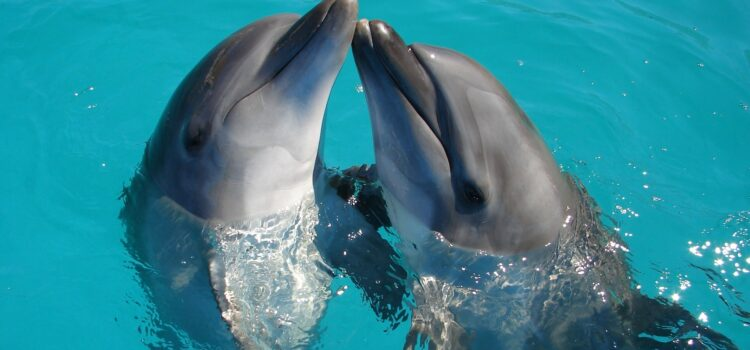 Do Dolphins Smell? No—And Here's Why
