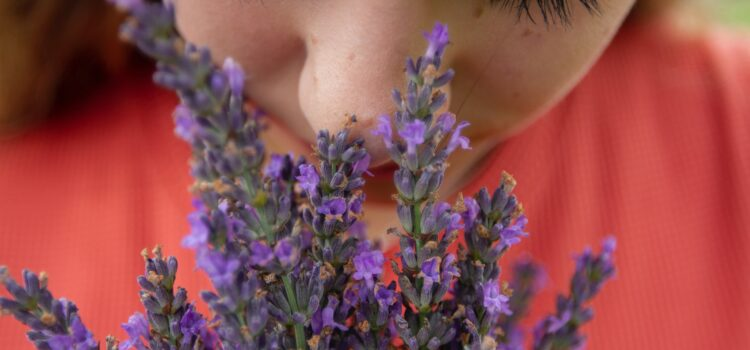 The Human Sense of Smell: The Nose Knows Evolution