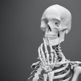 Human Skull Development: A Complex Evolution