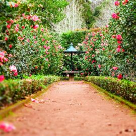 The Garden of Your Mind and How to Cultivate It