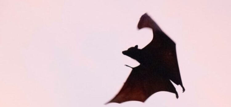 White-Nose Syndrome: Killing Bats in Their Sleep