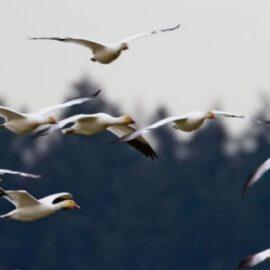 Species Dispersal Affects Global Biodiversity