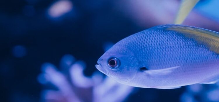 The Effects of Ocean Acidification on Marine Life