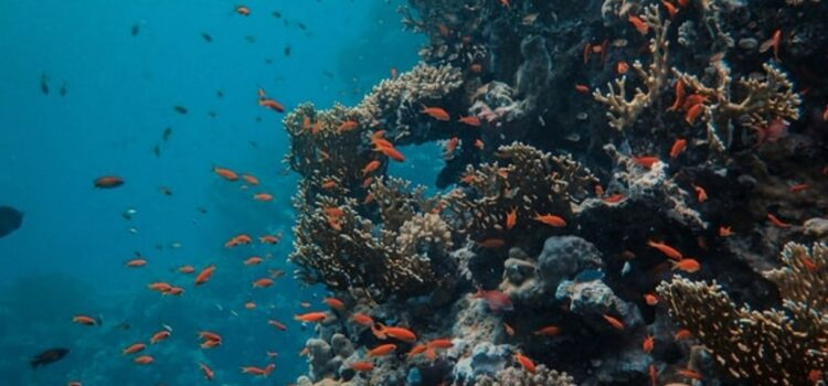 Why Are Coral Reefs Dying? Human Behavior