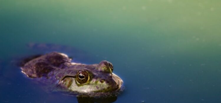 Amphibian Extinction: The Culprit Discovered