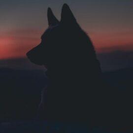 Alpha Dog: Meaning and Concept Interpretation