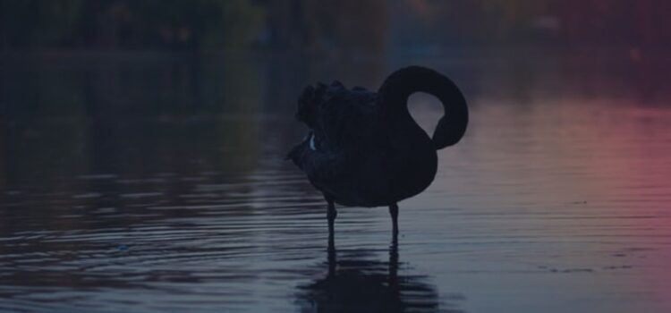 A Black Swan Event: Unpredictable or Improbable?