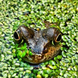 What Is Eat That Frog About? Boosting Productivity