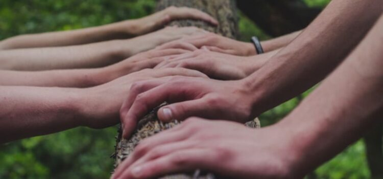 How to Foster Team Trust in a Complex Organization