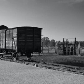 The Tattooist of Auschwitz Discussion Guide