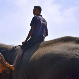 The Elephant and the Rider: The Happiness Hypothesis