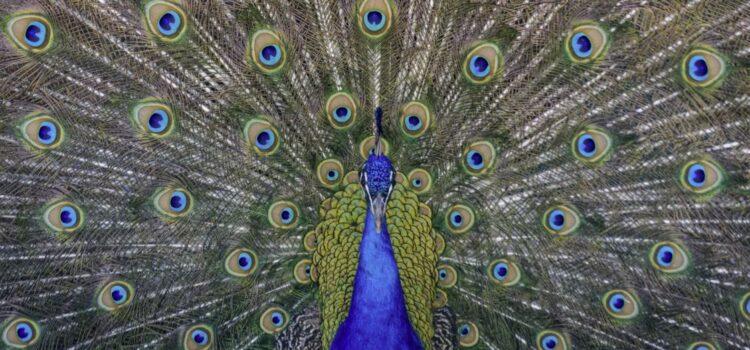 Evolutionary Relationships: Mate Selection & Jealousy