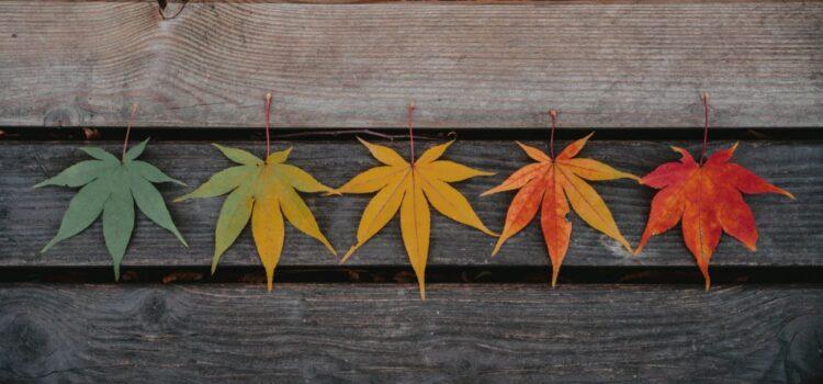 Symbolism of Seasons in Literature: Explained