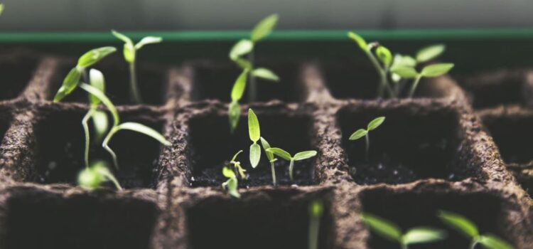 Building Good Habits Is Like Growing a Plant