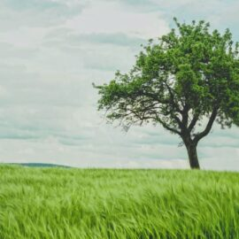 Buddha Under the Bodhi Tree: Learn to Pause