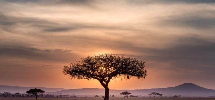 Greenlights: Matthew McConaughey in South Africa