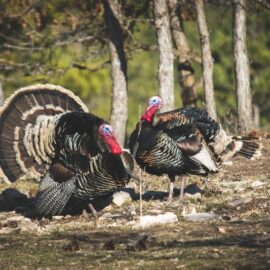 The Turkey Problem: Explaining Vulnerability
