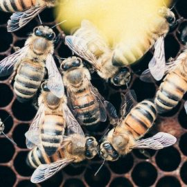 Flip the Hive Switch: How to Be Less Self-Centered